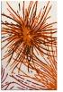 rug #546677 |  red-orange natural rug