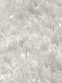 Product rayon micro 2-1 | shaggy rug